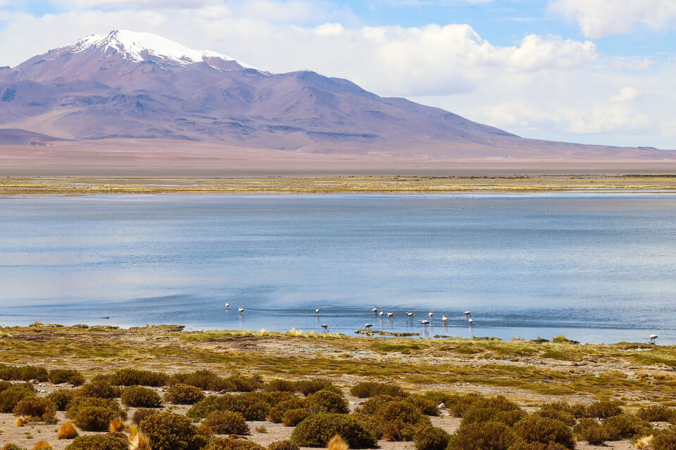 Onde encontrar flamingos no deserto do Atacama - Salar de Tara